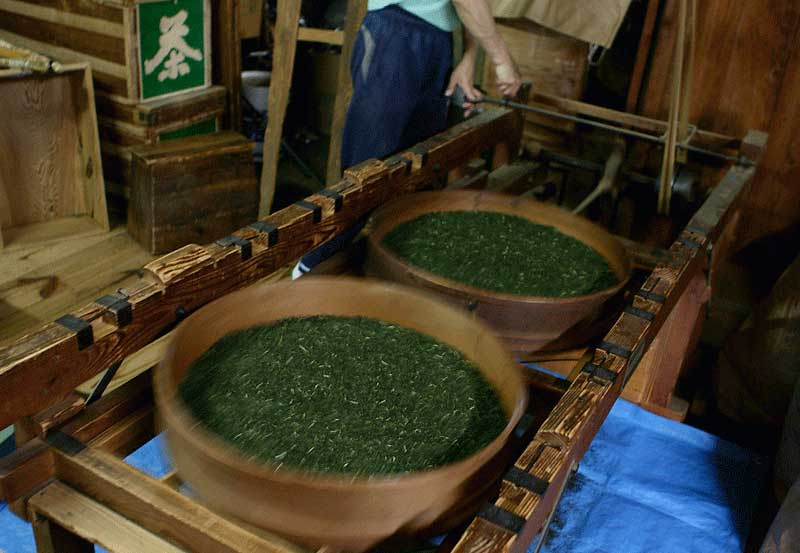 kajiyamachi_Green Tea Producer3