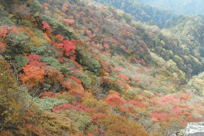 市房山の紅葉